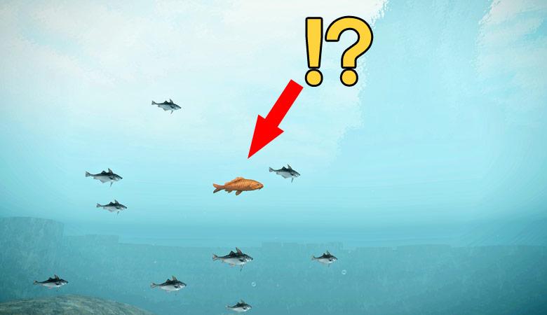 謎の巨大魚!?