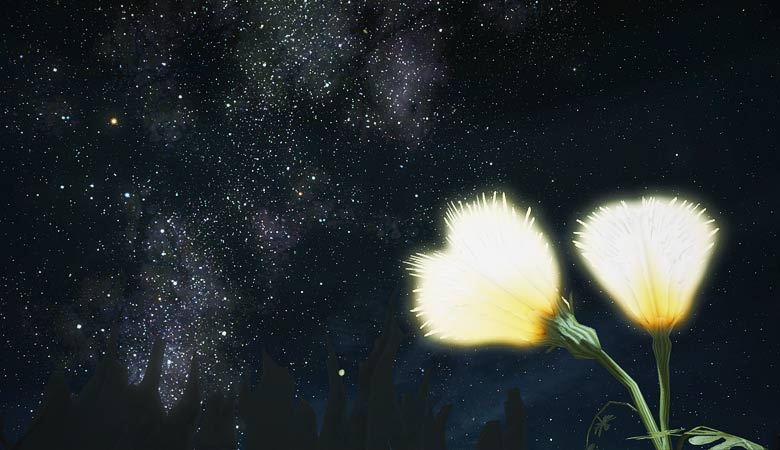 南部森林の夜空