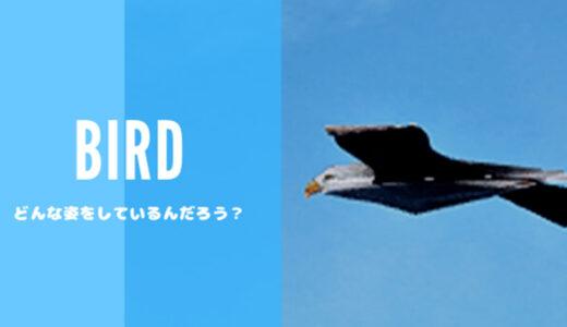 【FF14】どんな姿している? マップ上を飛んでいる『鳥』を撮影してみた!